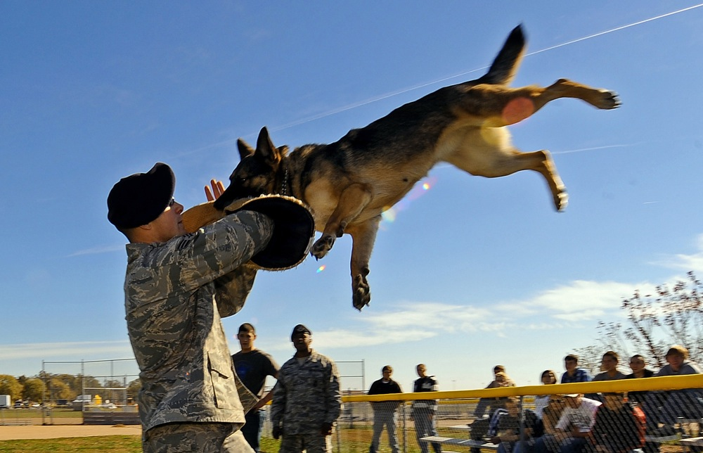 Senior Airman Steve Hanks hoists Ada up in the air after she clamped down on the bite sleeve as part of a working dog demonstration Oct. 20, 2010, at Offutt Air Force Base, Neb. The demonstration was part of a base tour for high school and college students ready to enlist in the Air Force. Airman Hanks is a military working dog handler with the 55th Security Forces Squadron. (U.S. Air Force photo/Josh Plueger)