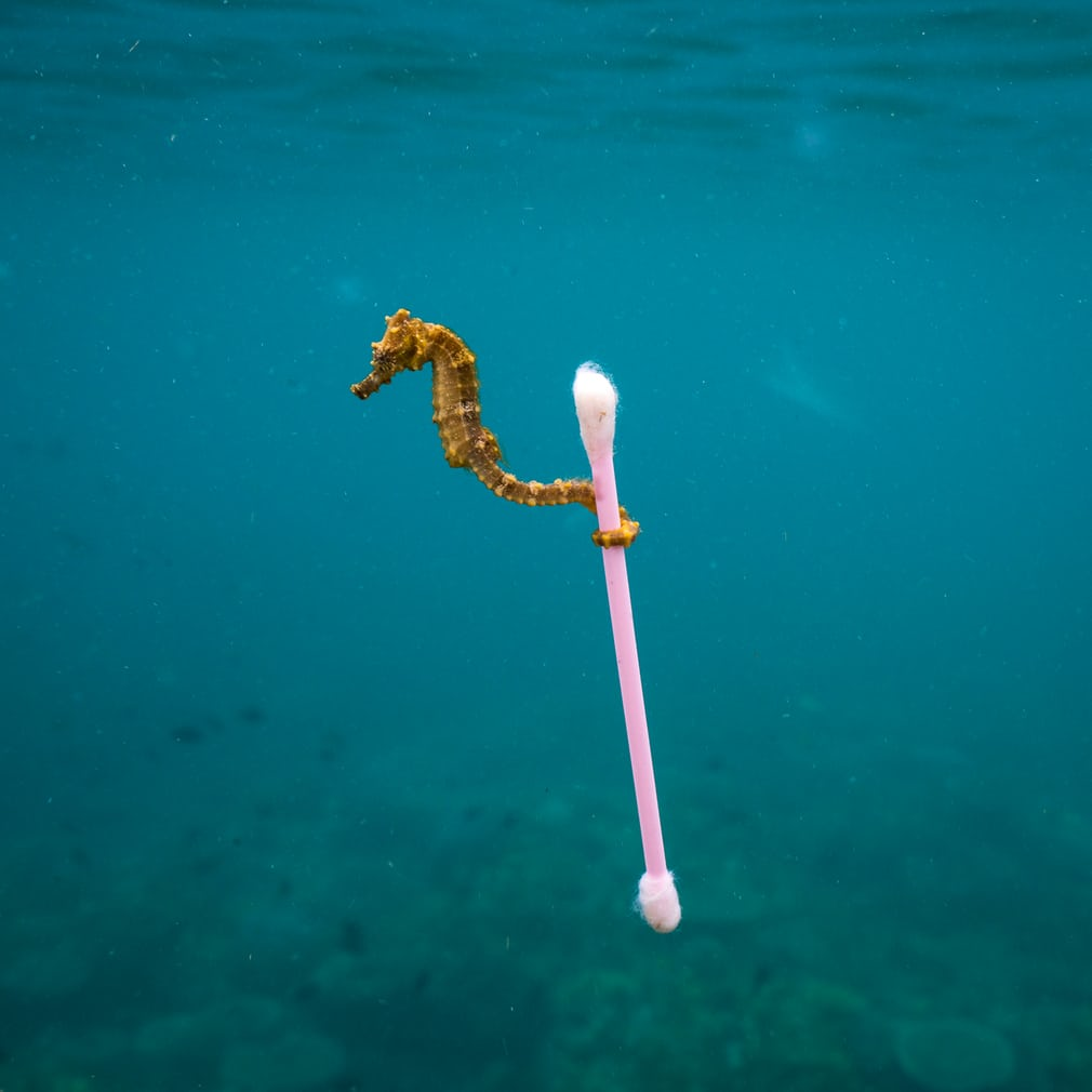 Photograph: Justin Hofman/2017 Wildlife Photographer of the Year